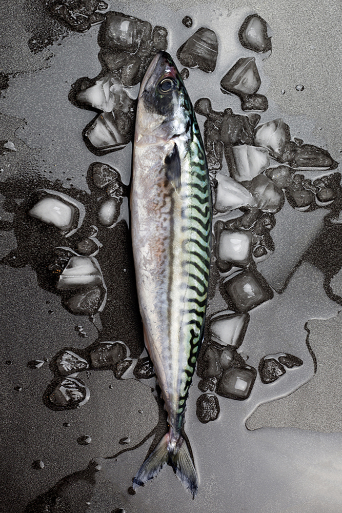 Mackerel, Fish, food photgrapher, liverpool, london, leeds, manchester