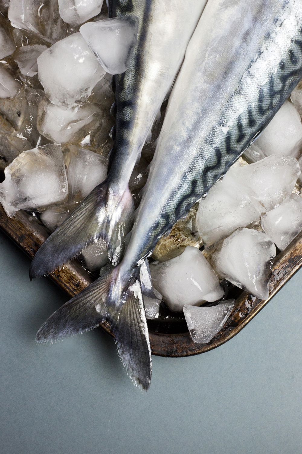 Mackerel, fish, food photography, photographer liverpool, fish scales, fish, ice