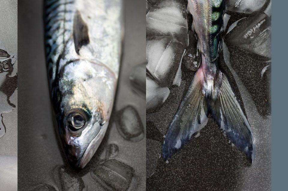 Fish, food photographer, Liverpool, seafood, Food Photographer UK